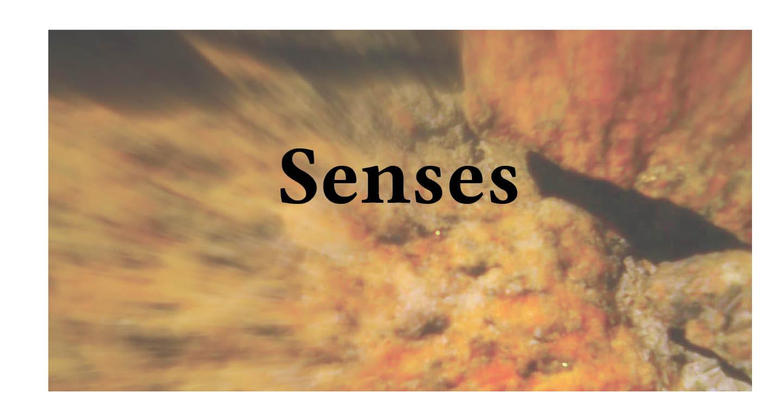 Adventures in Career Changing   Janet Gershen-Siegel   Senses
