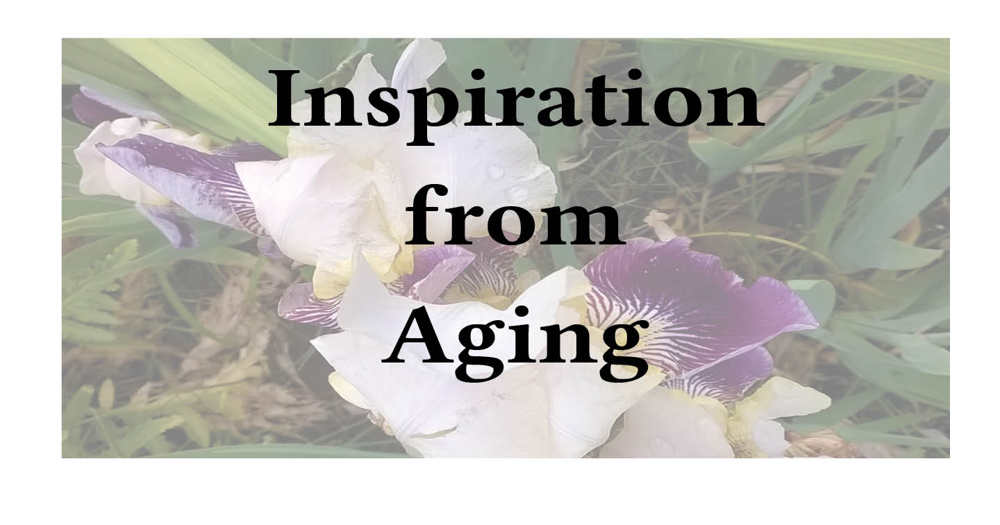 Janet-Gershen-Siegel-Adventures-in-Career-Changing-Inspiration-from-Aging